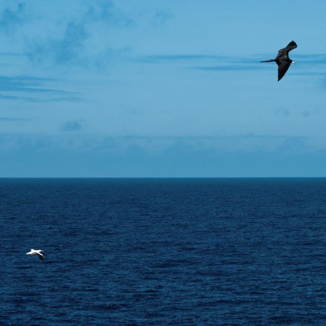 """""""Birds Flying over Ocean"""" stock image"""