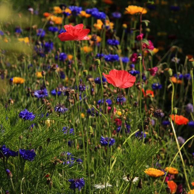 """Wild Flowers"" stock image"