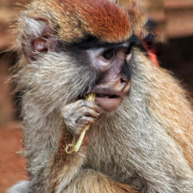 """Personal hygiene in wild animals"" stock image"