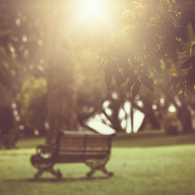 """Sunrise at Auckland Domain Gardens"" stock image"