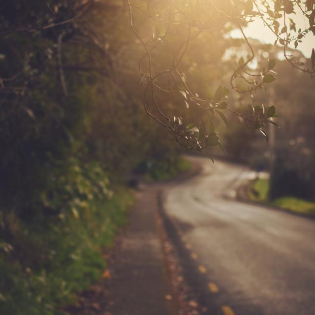 """Morning Walks"" stock image"