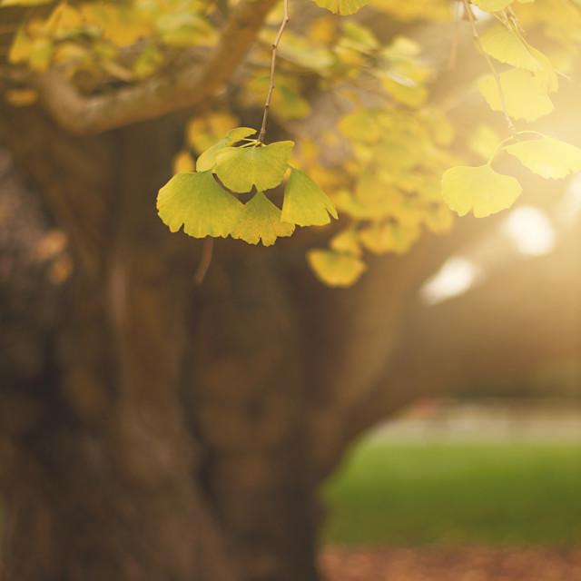 """""""Autumn sun flare"""" stock image"""