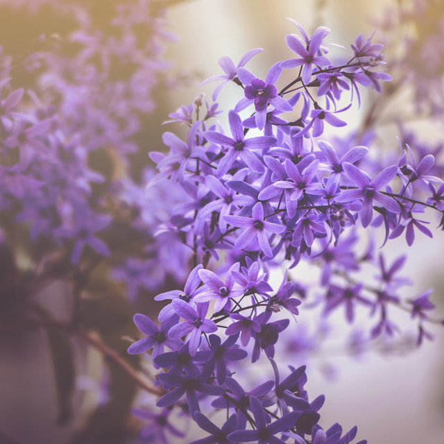 """Purple Mood"" stock image"