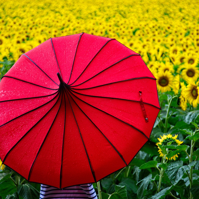 """Under Her Umbrella"" stock image"