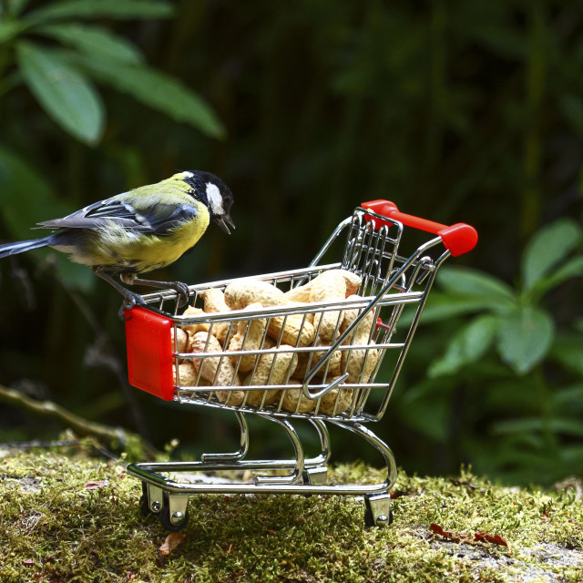 """Blue tit with a shopping trolley"" stock image"