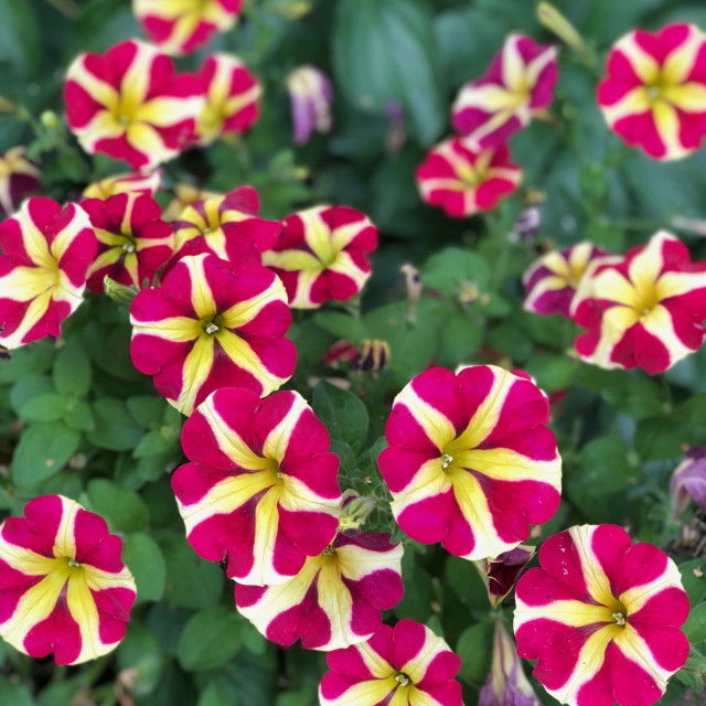 """Beautiful Summer Flowers"" stock image"