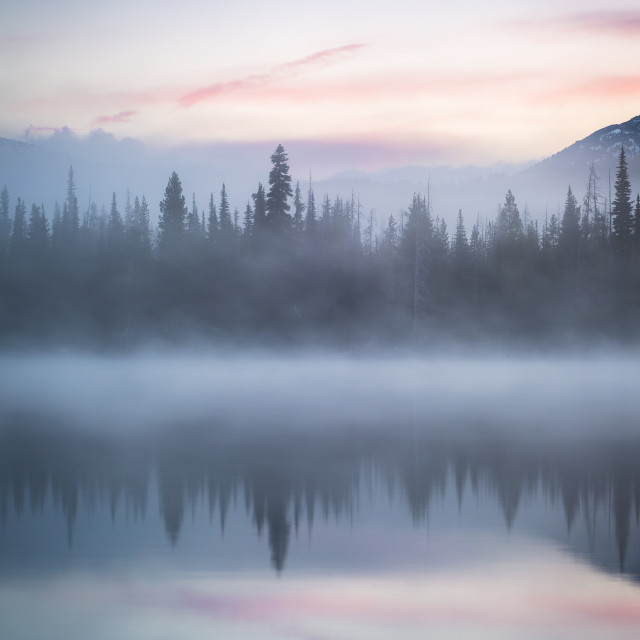 """Misty Tree Reflection"" stock image"