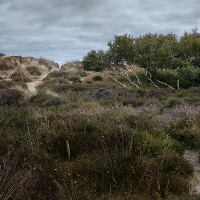 """South England Sand Dunes"" stock image"