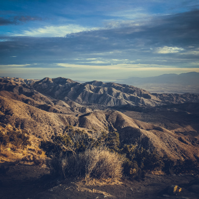 """Joshua Tree state park at sunset."" stock image"