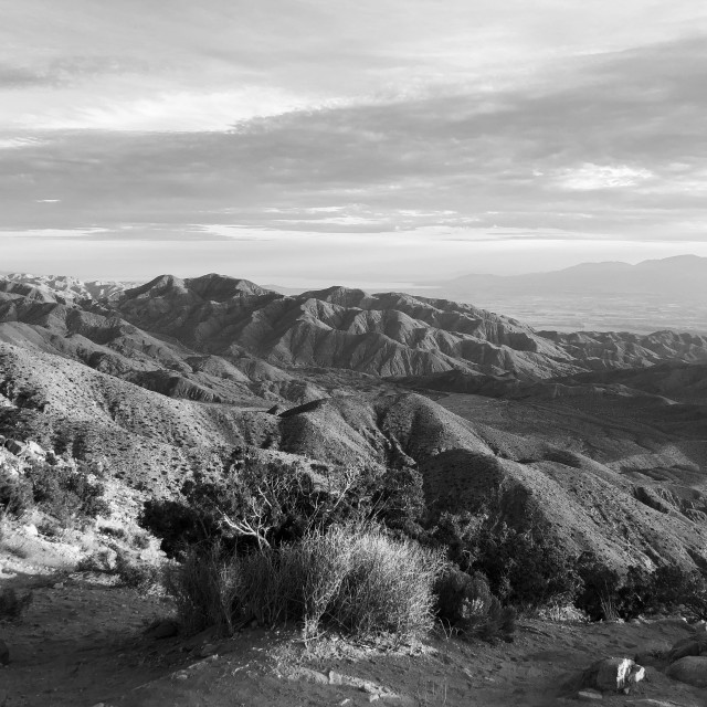 """Joshua Tree state park at sunset bw."" stock image"