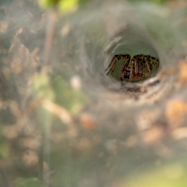 """Spider in a web"" stock image"