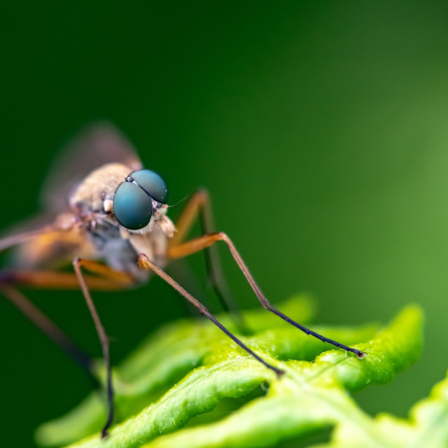 """A Fly"" stock image"