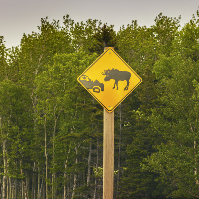 """""""Moose sign in Newfoundland"""" stock image"""