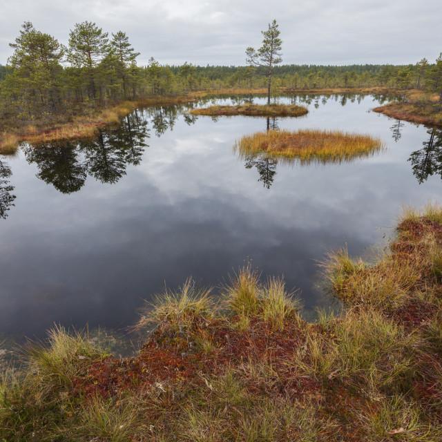 """Lahemaa National Park in Estonia"" stock image"