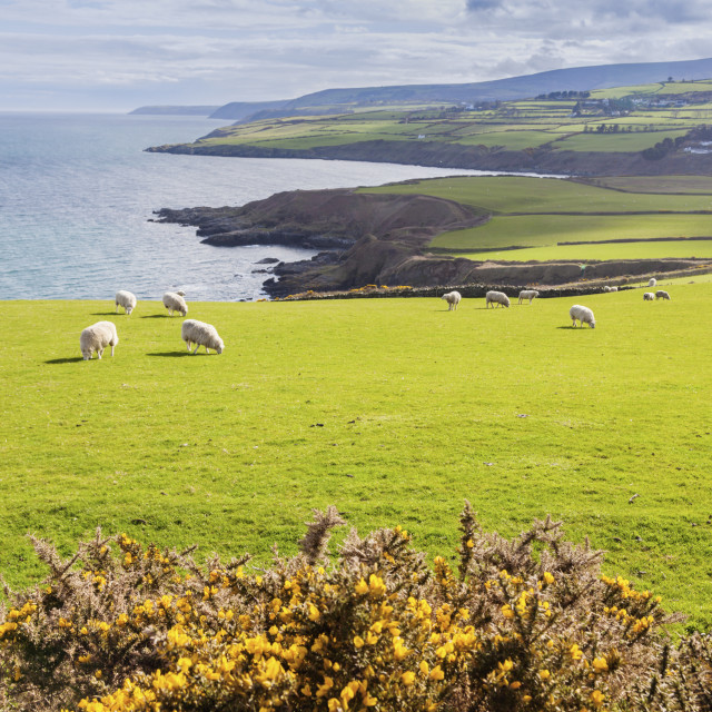 """Spring panorama of Isle of Man"" stock image"