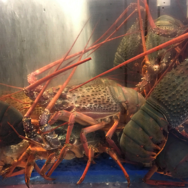 """""""Spiny Rock Lobster or Crayfish"""" stock image"""