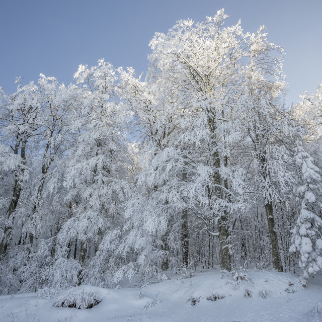 """Beautiful winter landscape"" stock image"