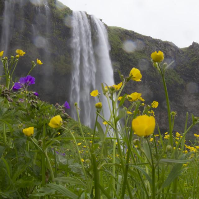 """""""Seljalandsfoss Waterfall"""" stock image"""
