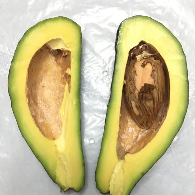 """Sliced Green-Fruited Philippine Avocado"" stock image"