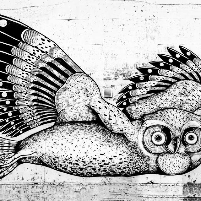 """Owl in Tromsø Norway"" stock image"