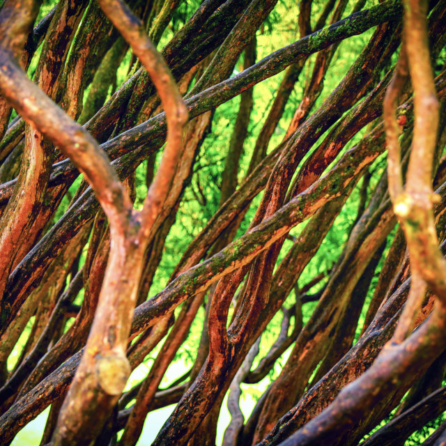 """""""Branches"""" stock image"""