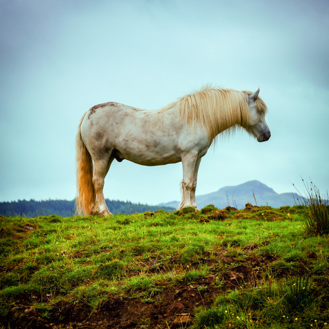 """""""Clydesdale"""" stock image"""