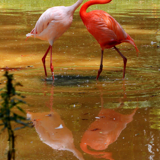 """Nature's Love"" stock image"