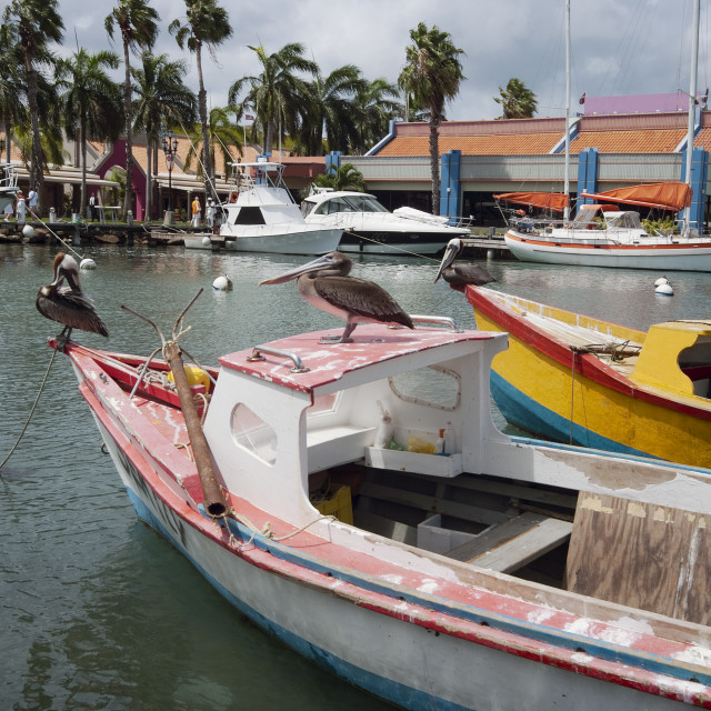"""Pelicans on a small fishing boat at Oranjestad Harbor, Aruba, Caribbean islands"" stock image"