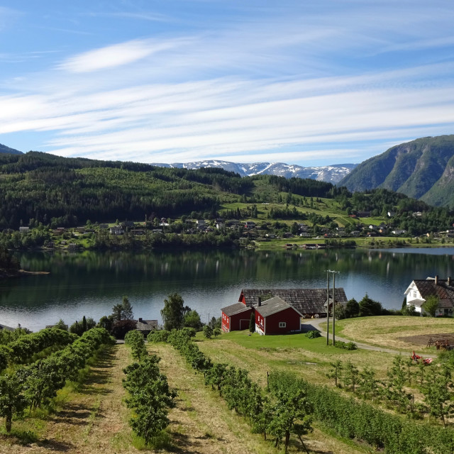 """Ulvik fjord and orchards in Norway"" stock image"