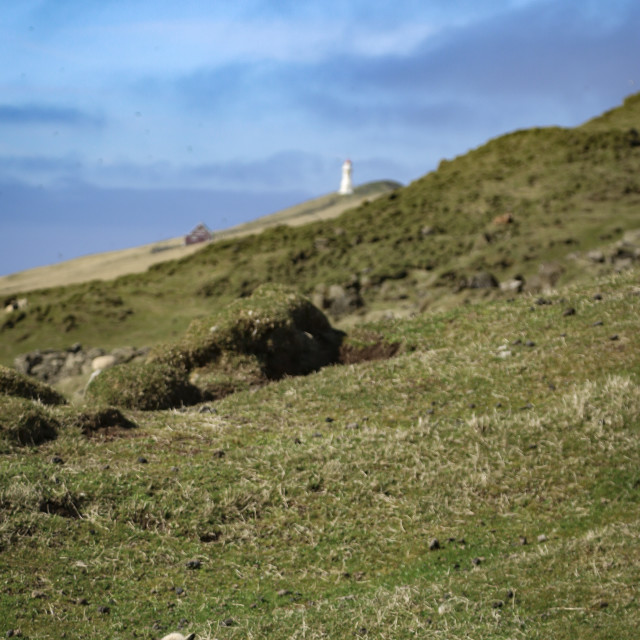 """Sleeping Lamb with Lighthouse 