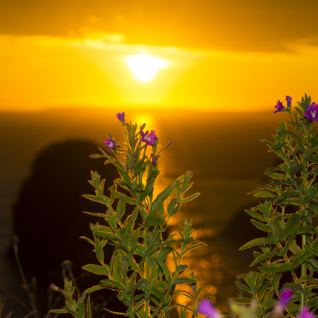 """""""sunset virgin rock with wild flowers"""" stock image"""