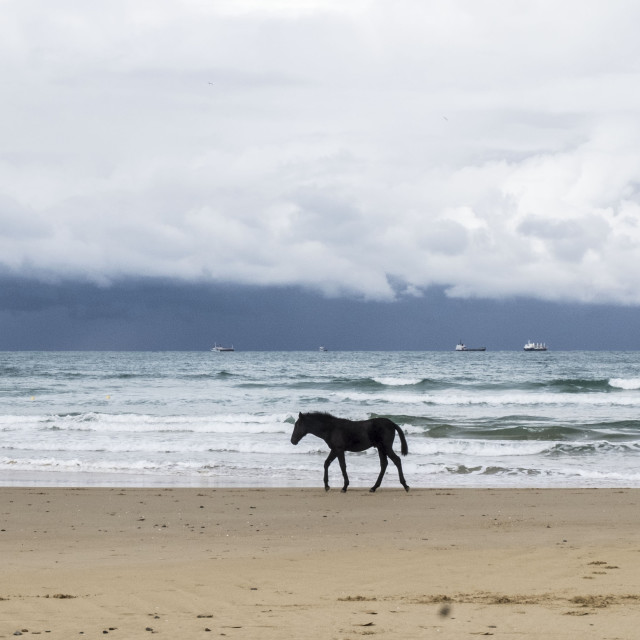 """Puppy horse and sea"" stock image"