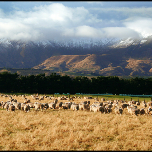 """""""Manapouri. New Zealand"""" stock image"""