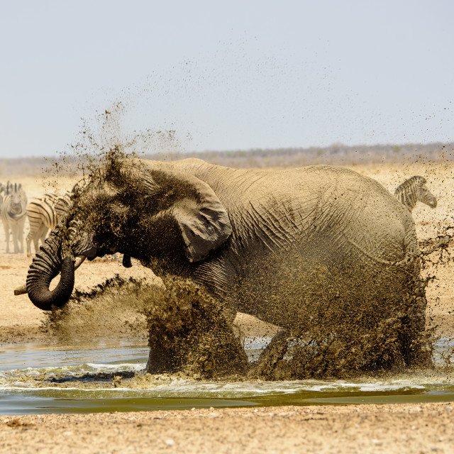 """Fun at the waterhole"" stock image"