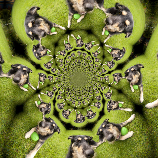 """Kaleidoscopic Pattern of a Dog"" stock image"