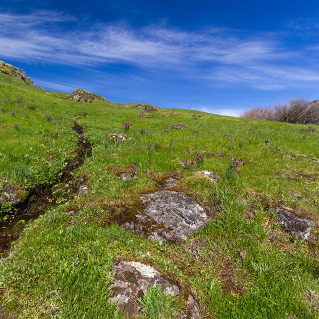 """Stream trickling down a verdant hillside"" stock image"