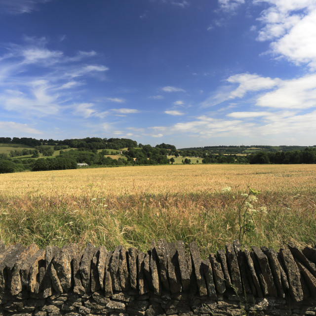 """Summer landscape near Chipping Norton town, Oxfordshire, Cotswolds, England"" stock image"