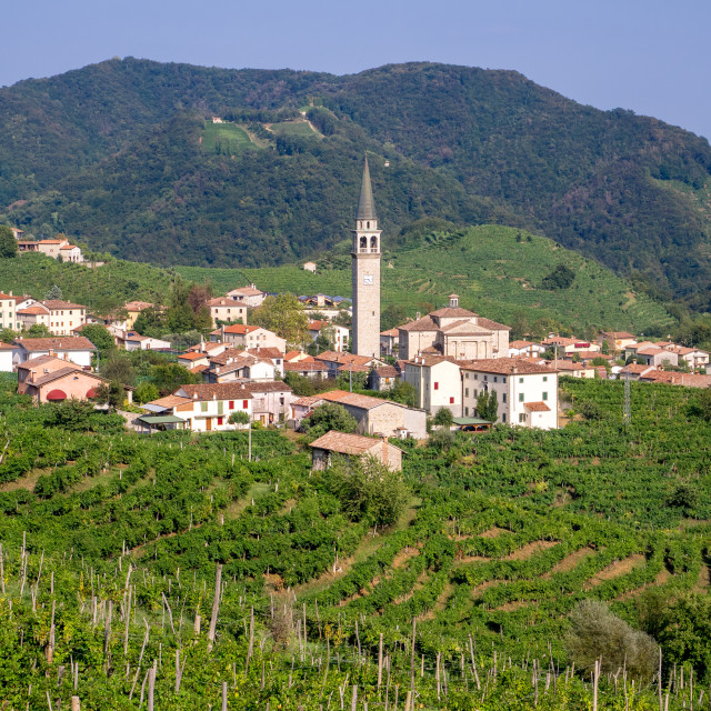 """""""Prosecco vineyards in Valdobbiadene"""" stock image"""