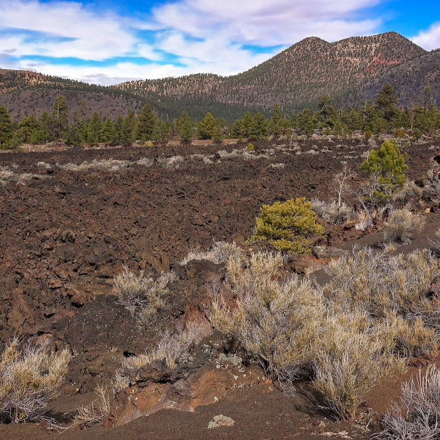 """""""Bonito Lava Flow at Sunset Crater National Monument"""" stock image"""