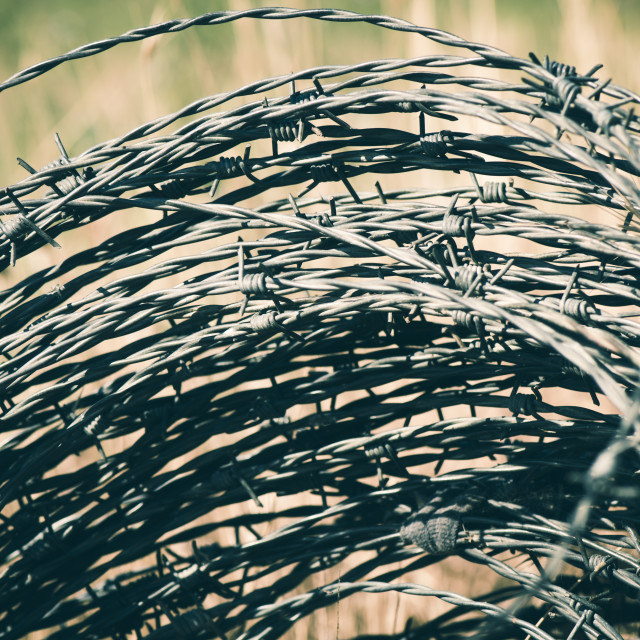 """""""Close up of a coil of Barbed wire"""" stock image"""