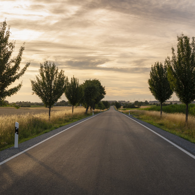 """""""Long road between trees and fields at sunset"""" stock image"""