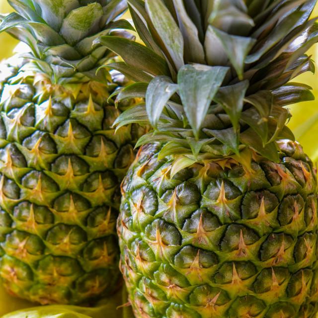 """Macro shot of two ripe pineapple fruits (Ananas comosus)."" stock image"