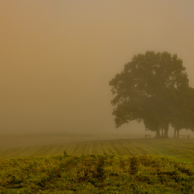 """Lone tree in fog"" stock image"