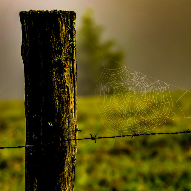 """Spider web with drops of dew againt a rustic fence"" stock image"