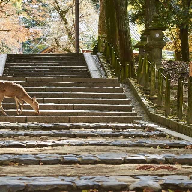 """""""Deers on Steps"""" stock image"""