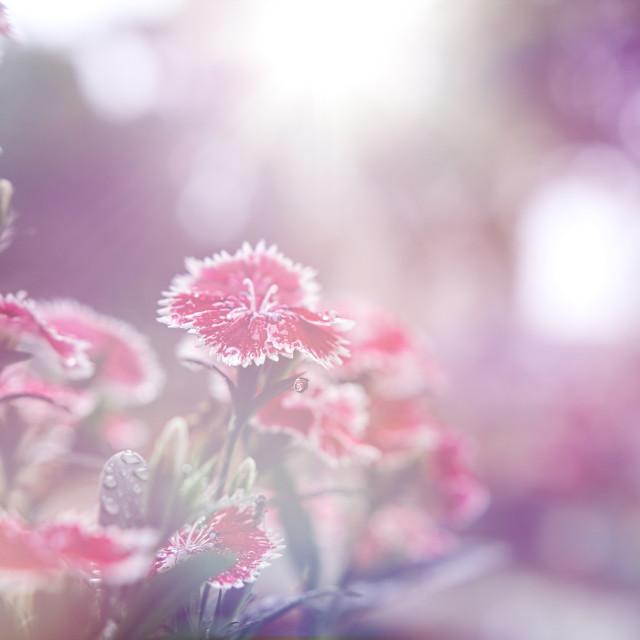 """Flower background"" stock image"