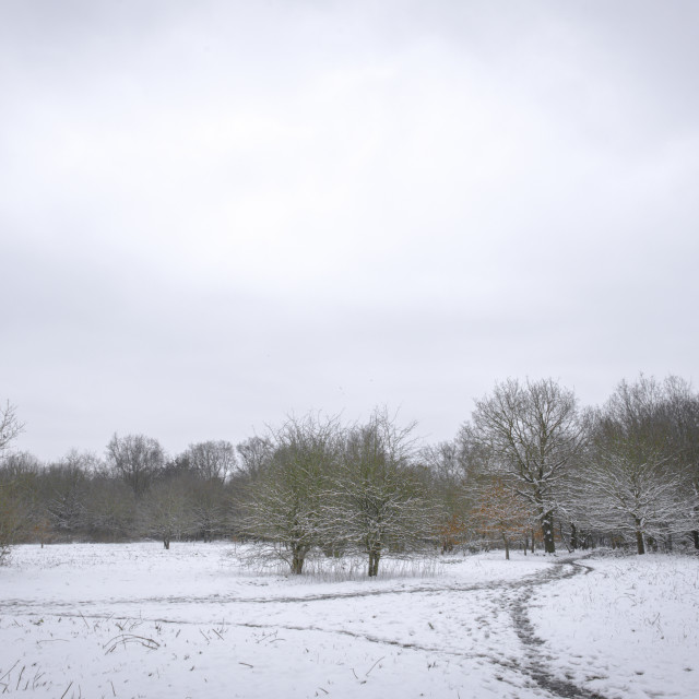 """Snowy pastures"" stock image"