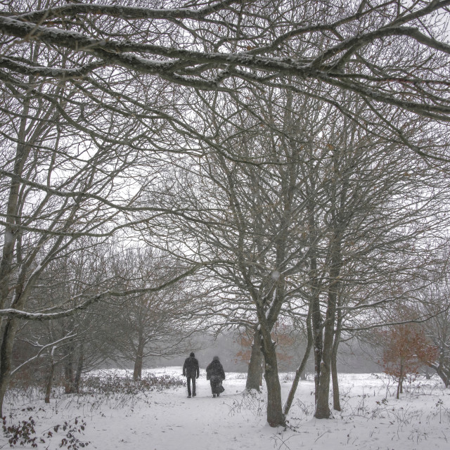 """""""A walk in the snow"""" stock image"""