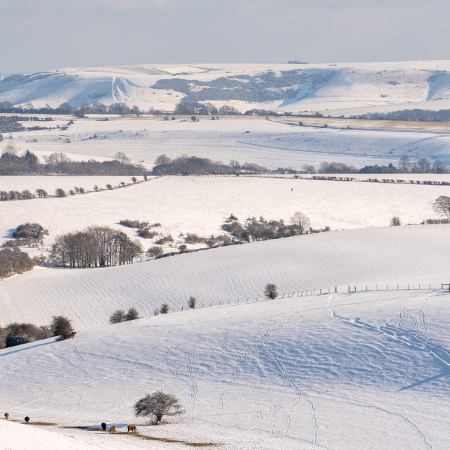 """South Downs Snow"" stock image"