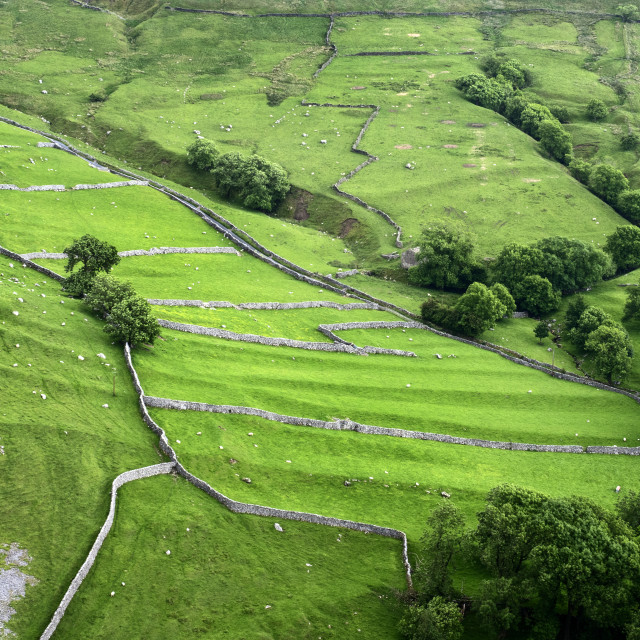"""""""Meadows in Malhamdale"""" stock image"""